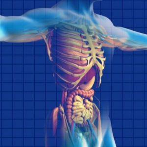 Functional Gut Health