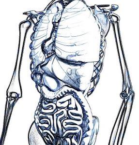 Gut Anatomy