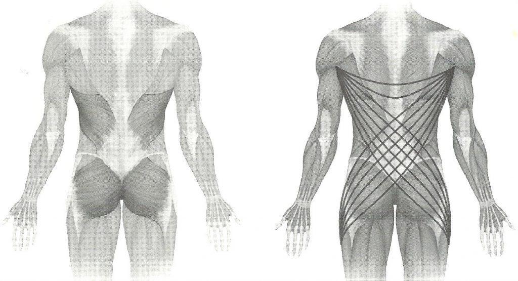 Muscle Slings
